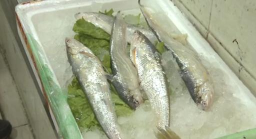 视频:申城河鲜大量上市 市民感慨刀鱼价高吃不消