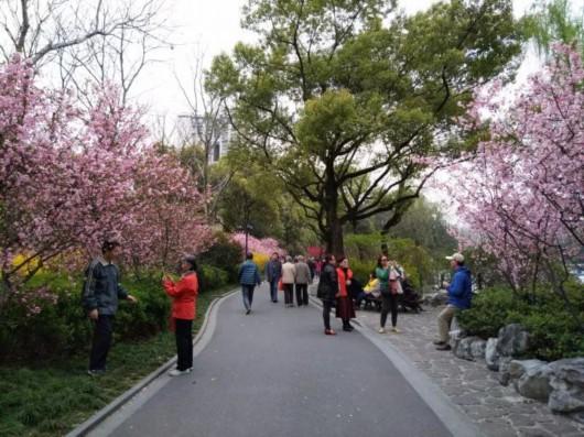 视频:申城呈现梅海盛景 赏花游客纷至沓来