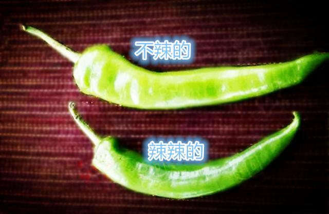 喜欢吃尖椒但不会挑选?一招教你分辨尖椒辣不辣!