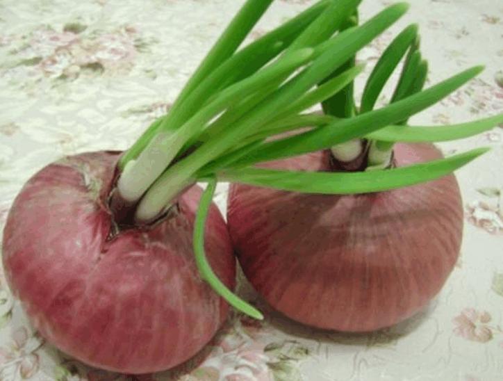 马铃薯长芽有毒,那蒜头长芽可以吃吗?