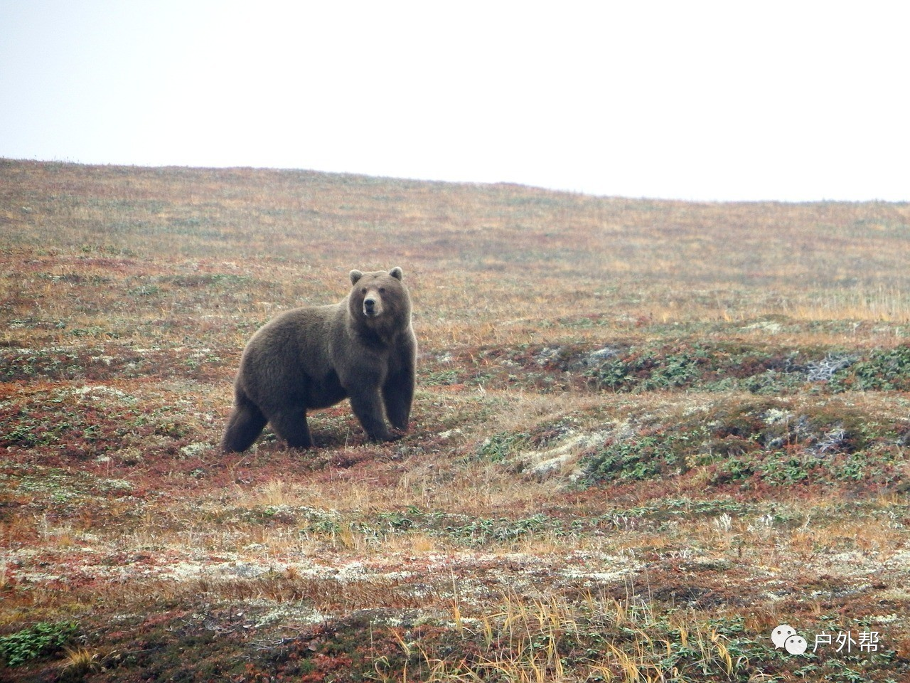 假如在野外碰到熊怎么办 怎么办?