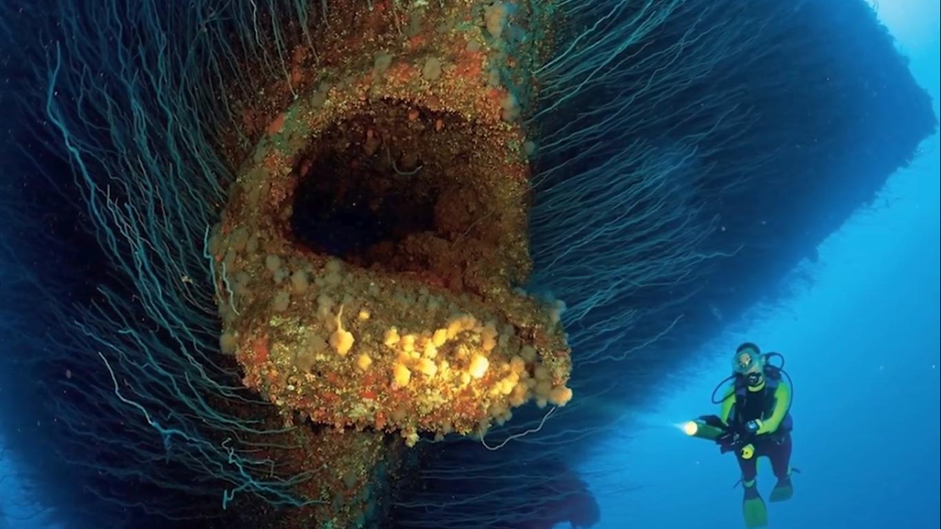海底拍攝的5張照片,看完令人毛骨悚然!_新浪看點圖片