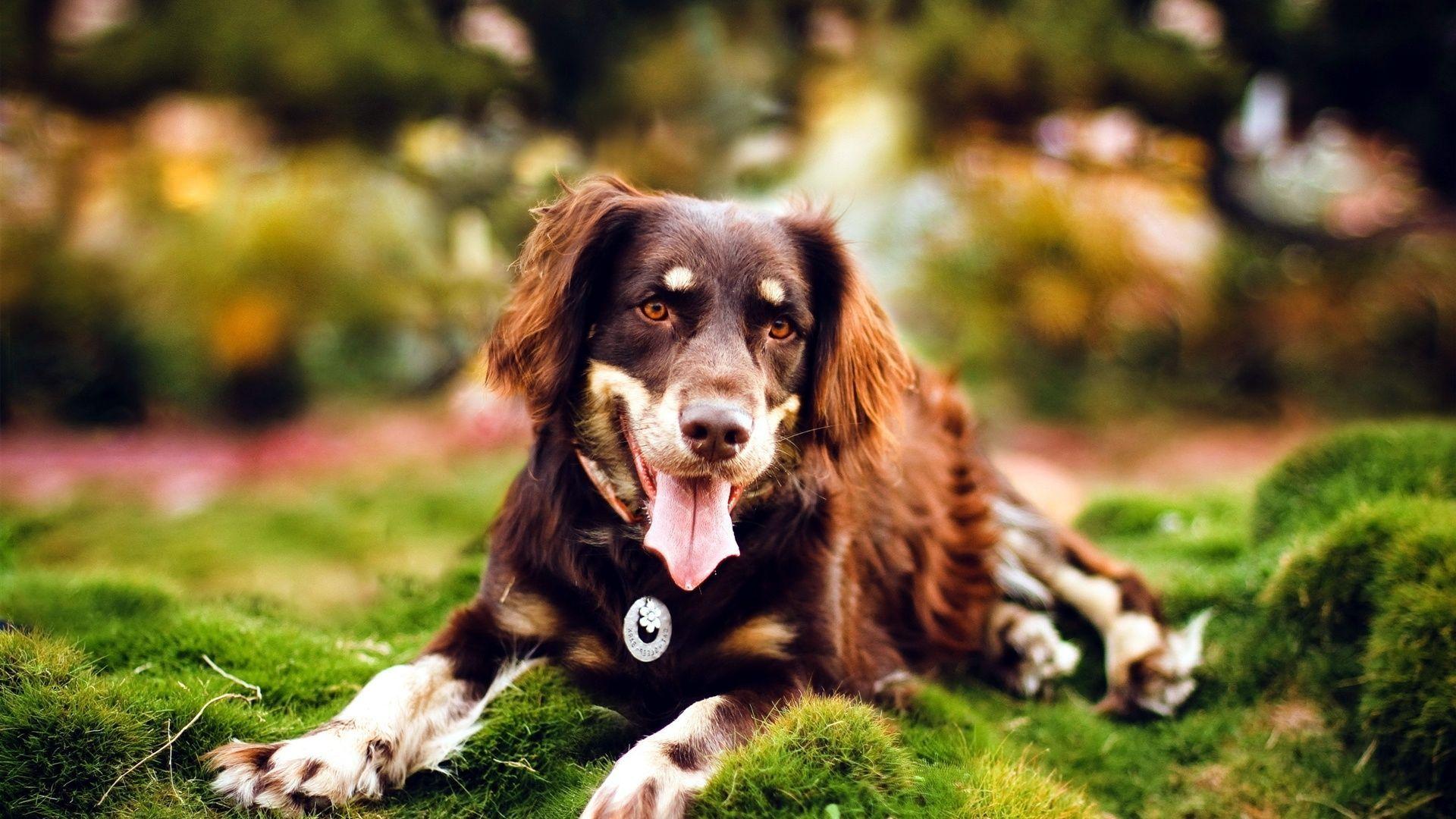 孕和狗干电影_女主人多年没怀孩子,狗狗去世后怀孕,b超照跟狗狗一模
