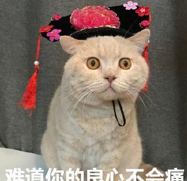日本田园猫_中华田园猫和日本田园猫大PK,说说你更喜欢哪个|中华|田园|猫咪