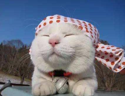 日本田园猫_中华田园猫和日本田园猫大pk,说说你更喜欢哪个