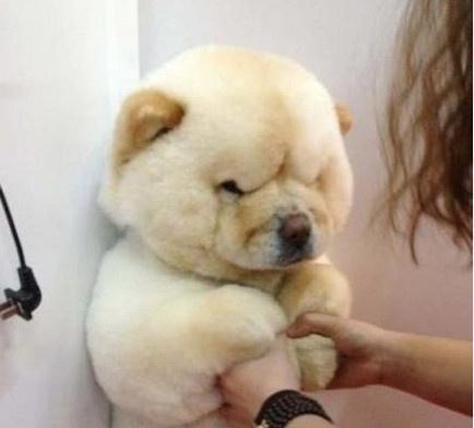 这么喜感的胖狗狗请给我来一打!