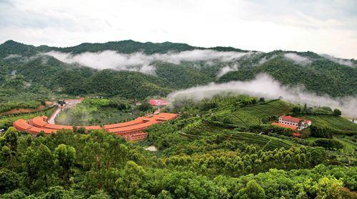 梅州雁南飞景区_1,雁南飞茶田:5a级景区,是一个融茶叶生产,生态公益林改造,园林绿化