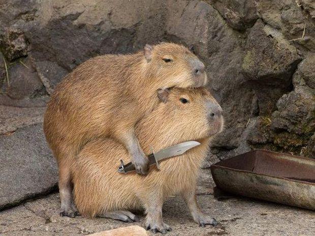 小屄很肥〔15〕p_别乱动刀子可是不长眼的喔,动物恶搞p图又来啦,能忍到
