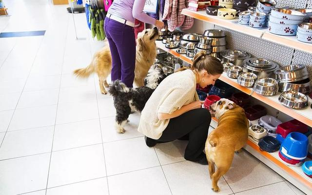 很多人开宠物店不赚钱,都是败在了这一点上……