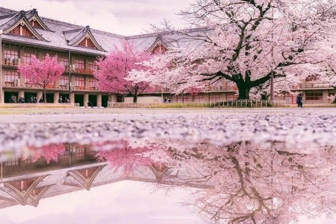 日本樱花_日本富士山樱花开了,这是雨后被樱花覆盖的奈良,美到极致