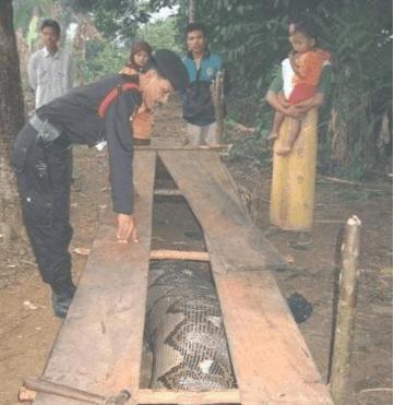 大蛇吃人事件_实拍超级巨型蟒蛇: 17米大蛇张嘴可吞人(组图)