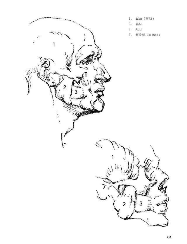 伯里曼肌肉_01 素描 在《伯里曼》一书中,大部分人物的肌肉都夸张到了极致,在这