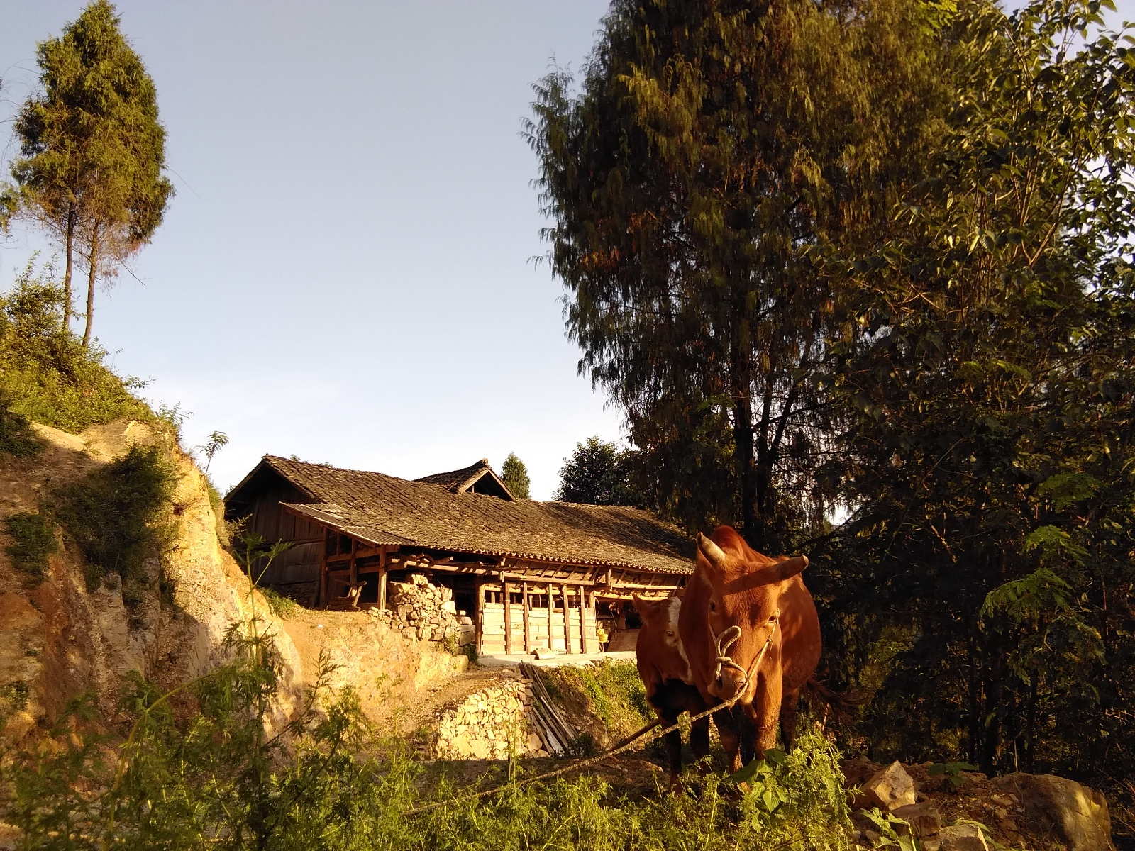 实拍高炉寨子里的标志 孤马双牛群羊
