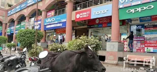 我们瞧不起印度,那么印度人怎么看中国?