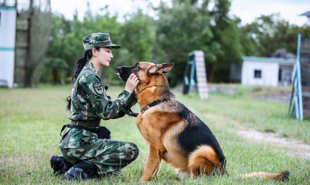 军犬奇兵_《奇兵神犬》中令人感动的训犬员和警犬之间的故事