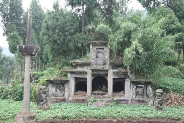 盜墓賊看到墓前有這種樹,就得趕緊離開,為什麼