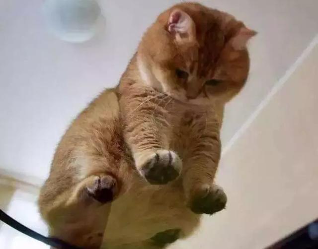 黑肥胖女和狗性交_网友在雪地发现一只柴犬,可转过头来后,网友:橘猫胖成了狗!