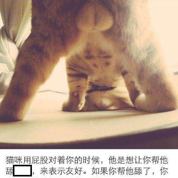 大胆想法_一摸母猫它就翘屁股, 主人当场懵比, 网友: 我有个大胆的想法