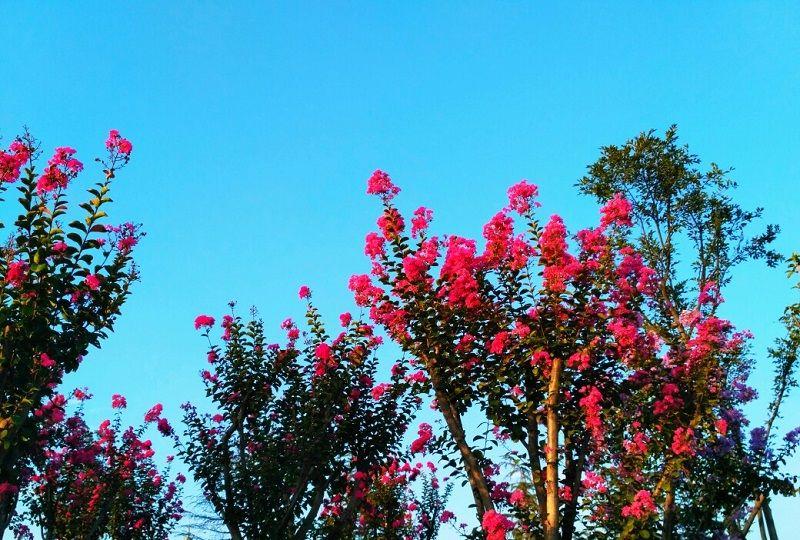 亚洲无ma区春暖花开_春暖花开的季节已经到了,你发现这些市花的美丽吗?