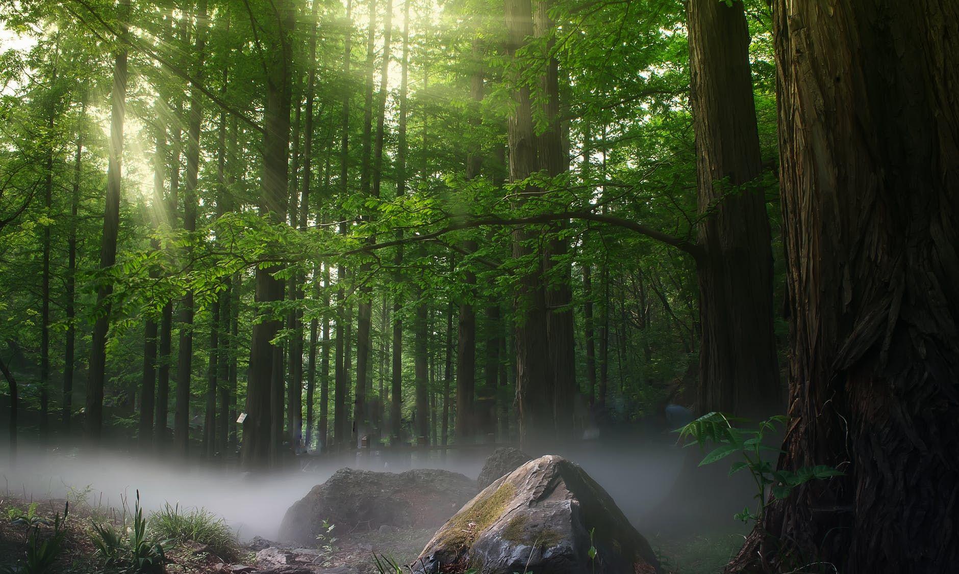 大自然森林风景图片桌面壁纸