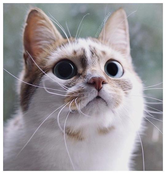 推主家的潮流猫,谁还不是端庄美丽会打扮的小公举,太美了