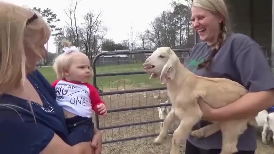 小宝宝第一次见小羊不料竟然和小羊吵了起来镜头记录搞笑画面