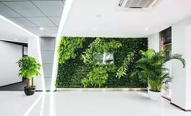 什么是生态植物墙?室内植物墙有什么功能?