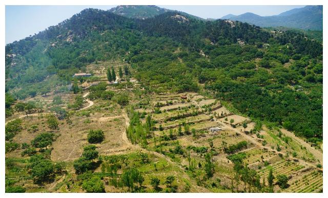 山东泰安飞行员农村创业开直升机拍600亩樱桃园