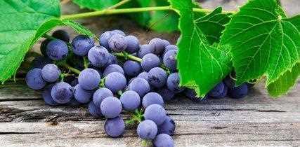 葡萄对身体有什么好处 减肥、抗衰老、保护心血管
