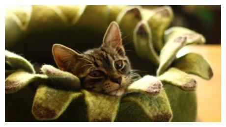 猫窝不仅要实用,更要时尚,让猫咪走在时尚潮流的前方