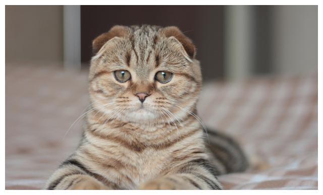 猫咪配合主人玩游戏,表情让人笑喷,猫:多大了,还玩幼稚游戏