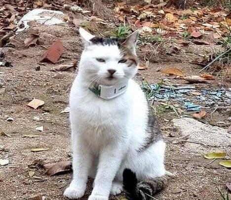 给猫咪装了个GPS,结果猫咪的踪迹你根本看不懂