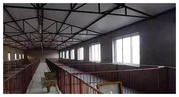 明年想开个养猪场,都需要办理什么证件,你都知道吗?