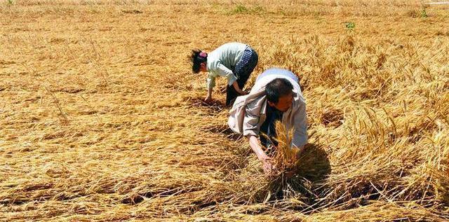 种地_农民都不回农村种地了, 对粮食价格会有影响吗?