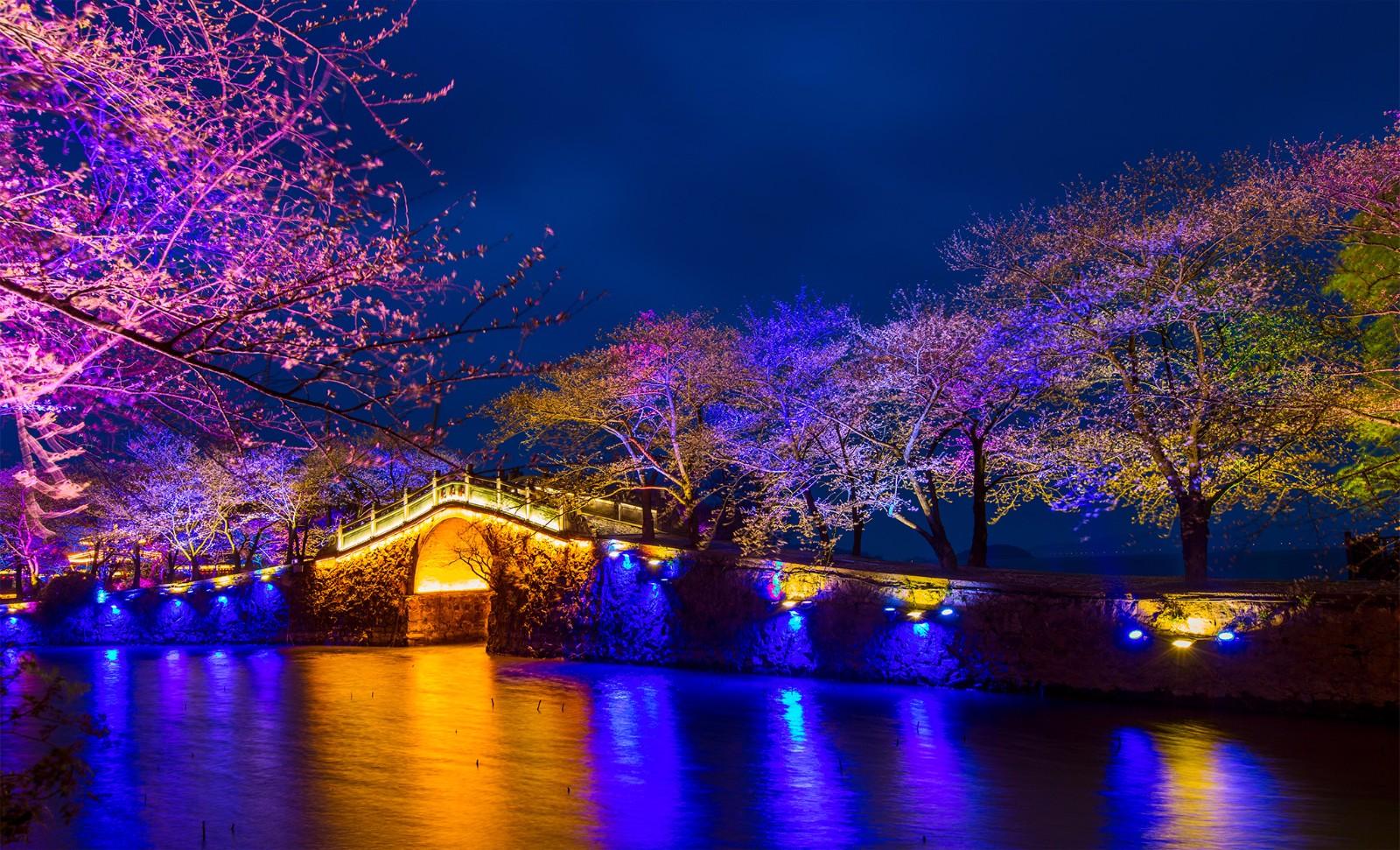無錫太湖黿頭渚夜賞櫻花,昨晚開始試燈