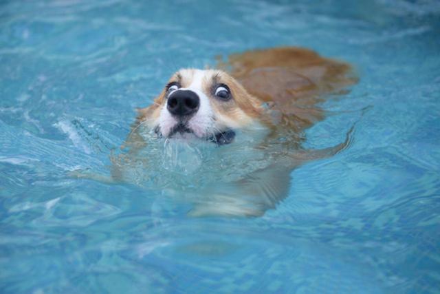 搞笑圖片:狗狗界的時尚模特兒圖片