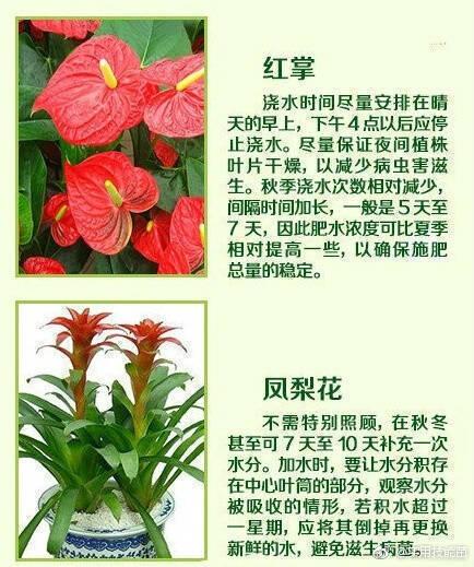 常见的家养花种类_18种常见家养绿植的正确浇水方法!送给养花的你 |养花|家养|绿 ...