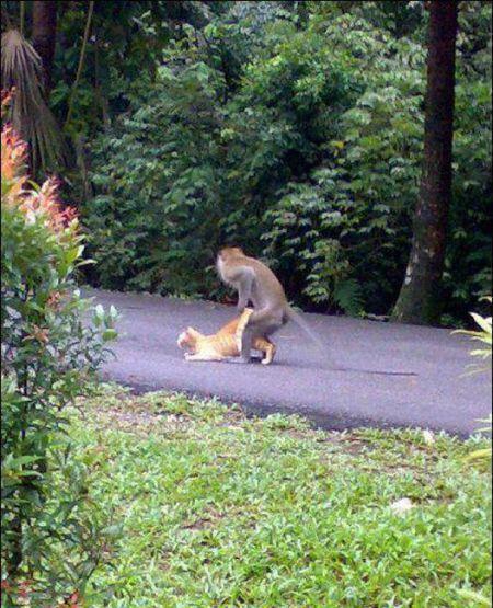 欧美乱伦群交小�_盘点令人瞠目动物交配: 猴子群交与猫乱伦(图)