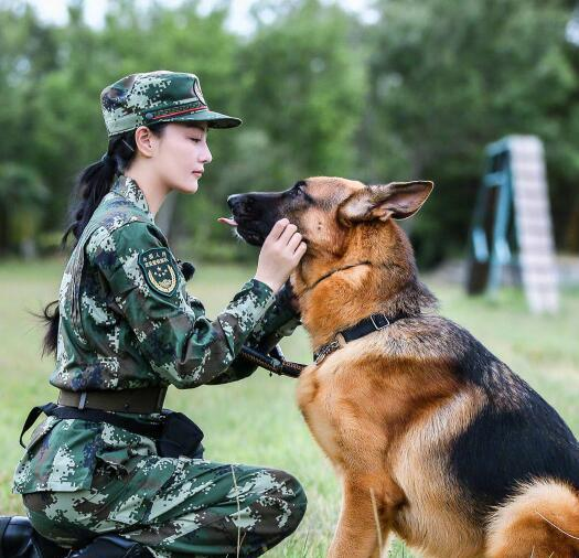 军犬奇兵_张馨予《神犬奇兵》中展现女汉子力, 瞬间被她圈粉了啊!