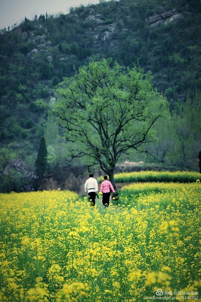 山村熟妇与少年_人像摄影:春到山村,油菜花之恋
