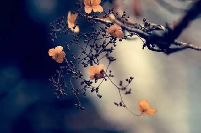 如�_闲看花开,静待花落,冷暖自知,干净如始.