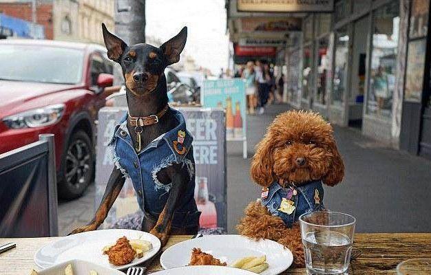 夫妻两人为狗狗设计牛仔服,每件412元,风靡全球!