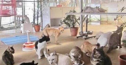 新加坡女子收养数百只流浪猫,给它们买猫粮,自己却饿到皮包骨