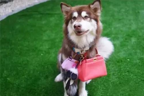 明星有錢太任性,養的寵物有點嚇人不說,還有人花800萬給狗整容