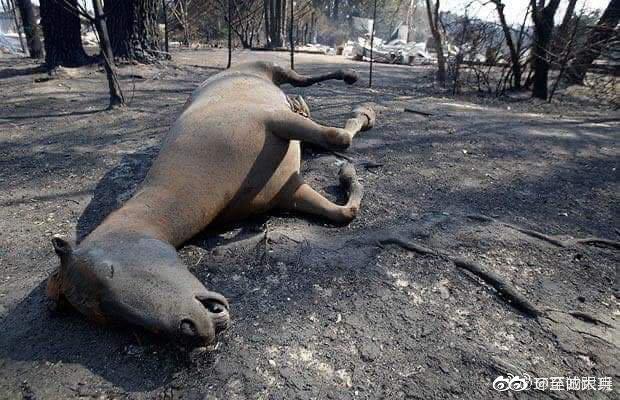 组建联合国军,扑灭山火? 保护动物,保护环境