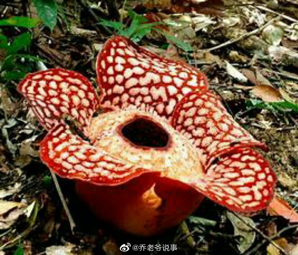植物 腐生 腐生植物と共生植物の違い
