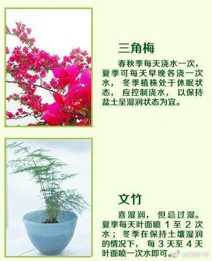 常见的家养花种类_18种常见家养绿植的正确浇水方法!送给养花的你|养花|家养|绿植 ...