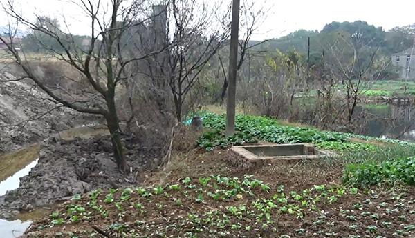 堆场(左)紧临周边村民菜地和水塘(右),淋溶液直通水塘。