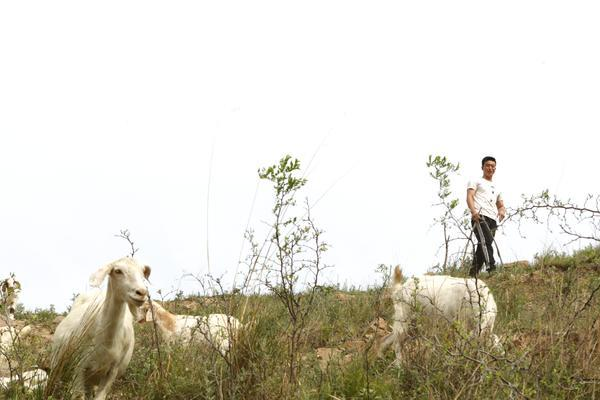 洛阳31岁健身教练回乡养羊:山沟盖别墅,享受世外桃源般生活
