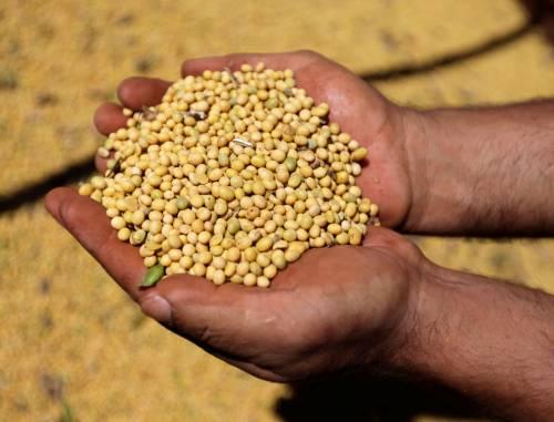 美国大豆积压程度前所未有 因中国从美国进口的大豆数量锐减